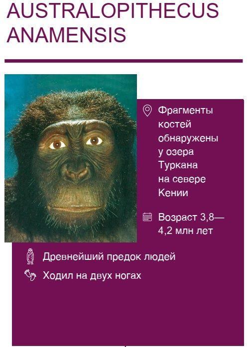 Australopithecus-anamensis