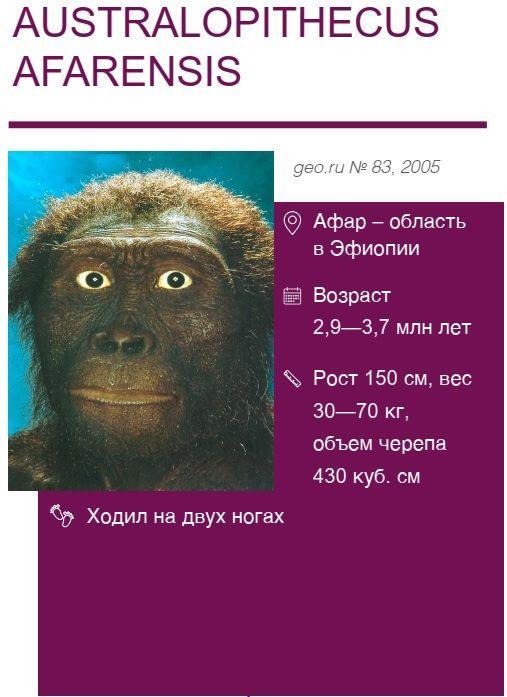 Australopithecus-afarensis