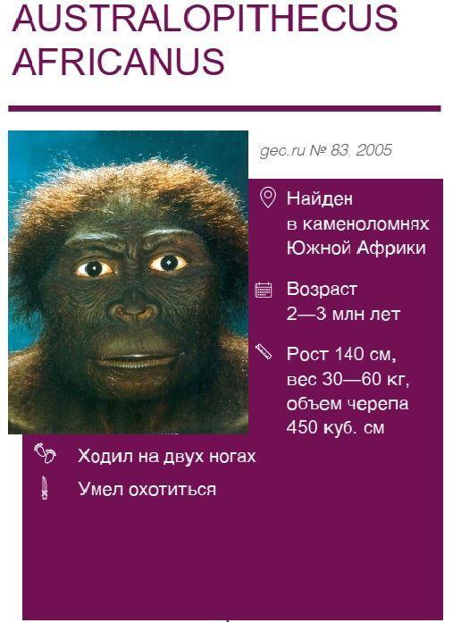Australopithecus-africanus